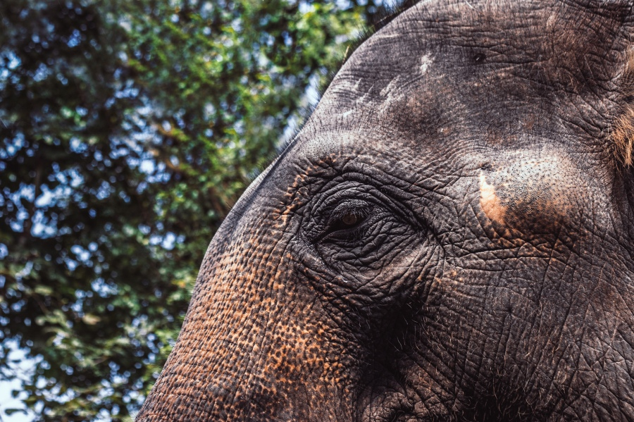Elefantit-12-3.jpg