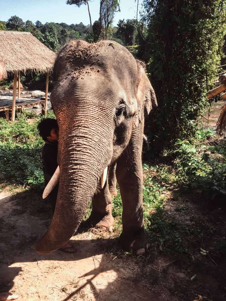 elefantit-13-2