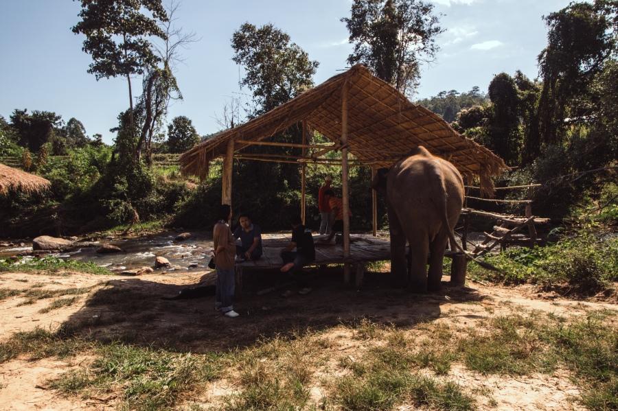 elefantit-6