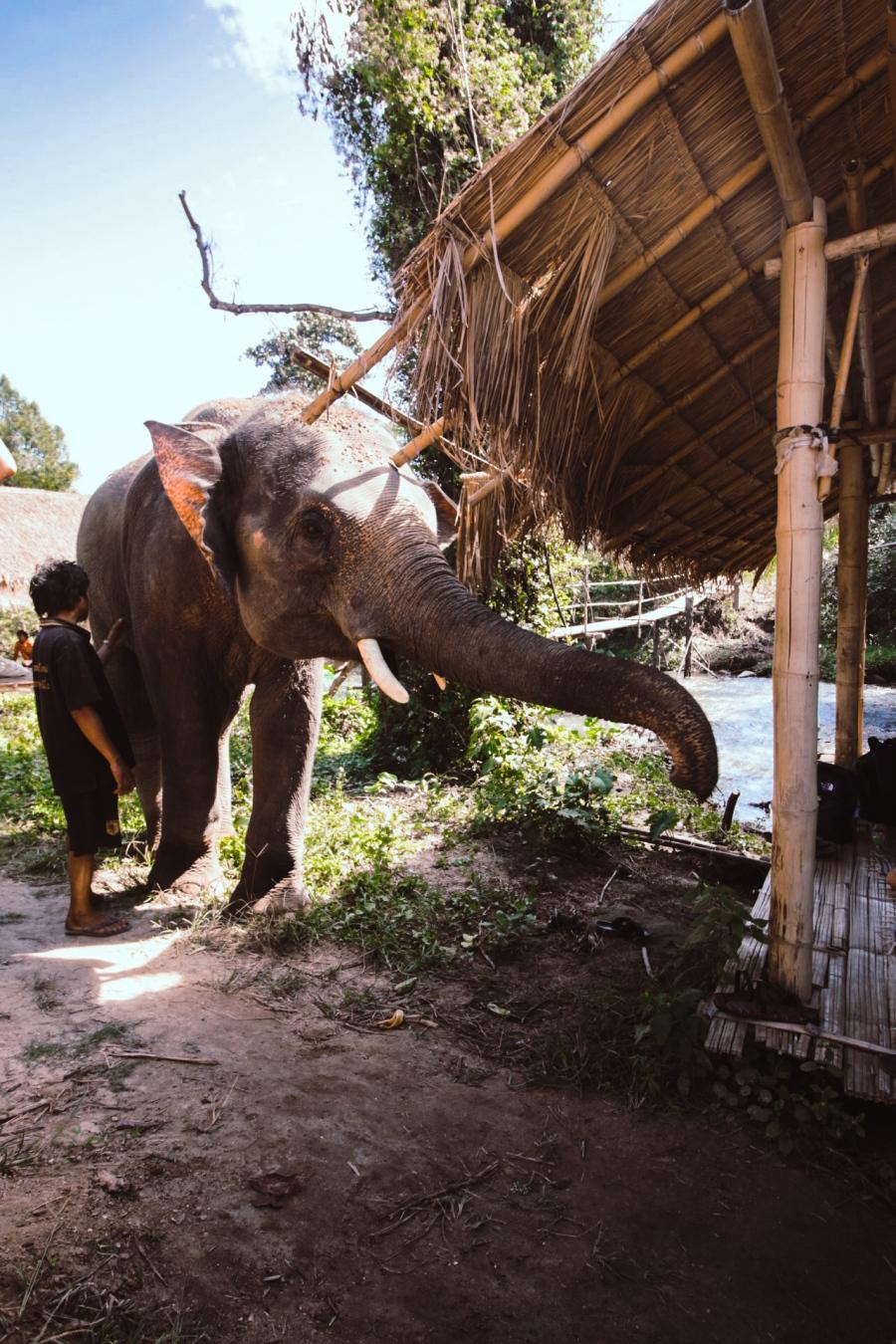 elefantit-7