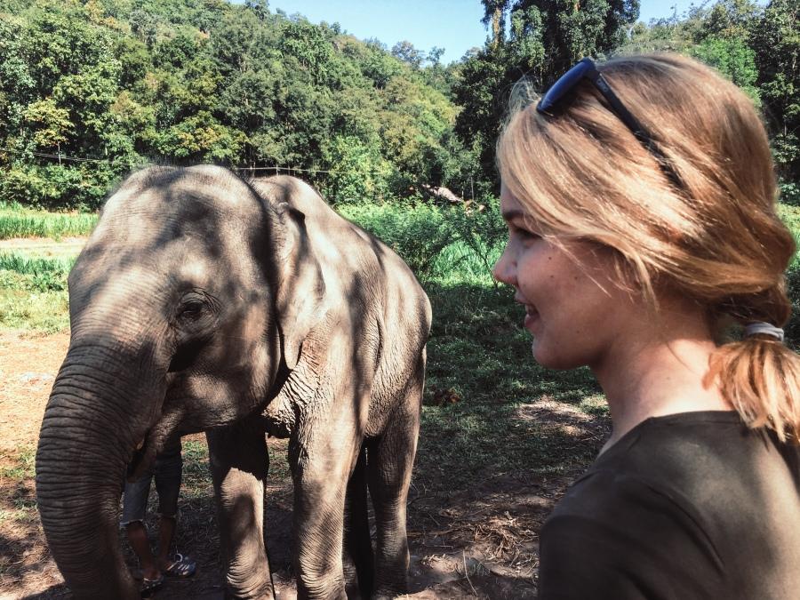 elefantit-9